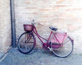 One of many bicycles